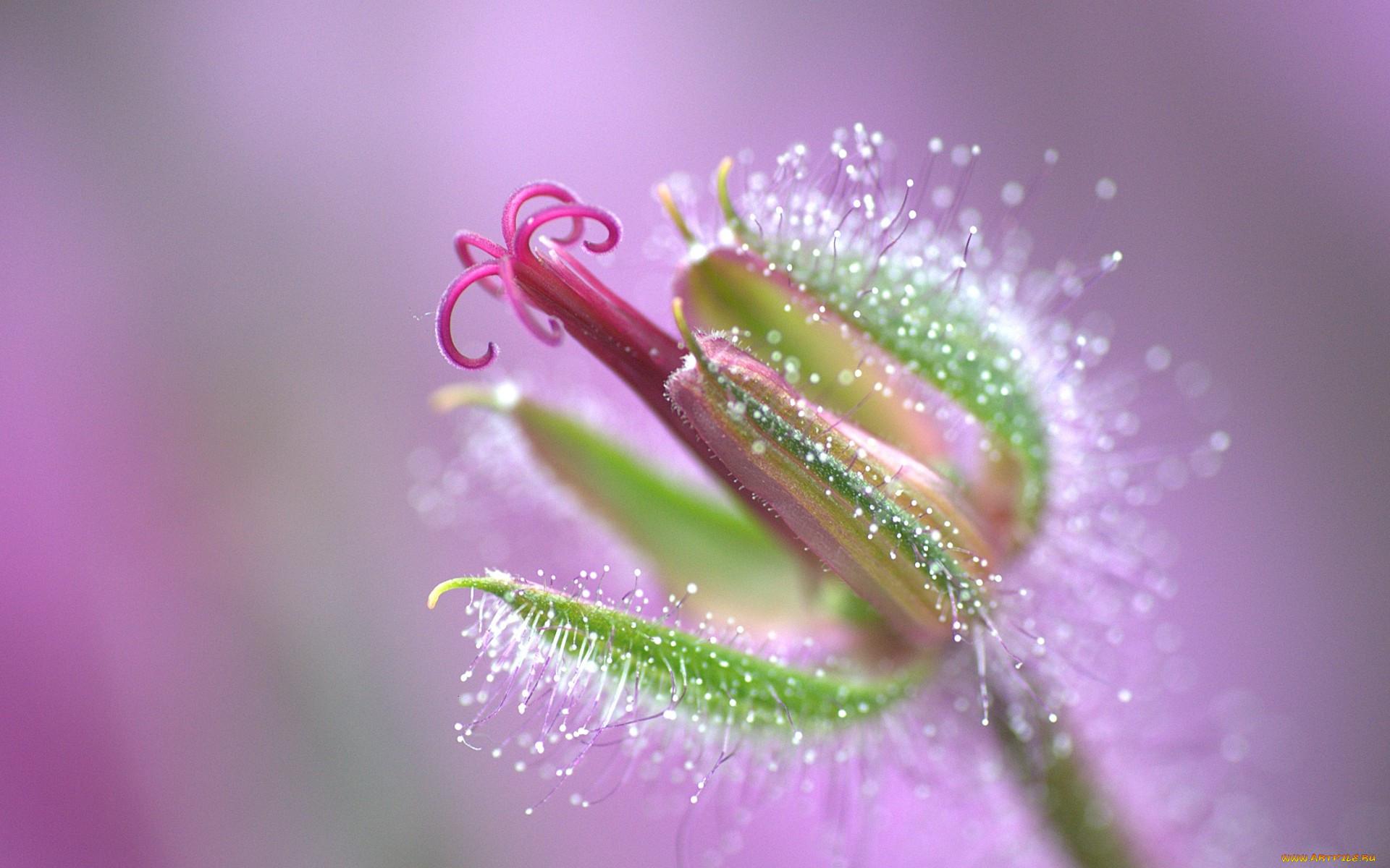 Капли росы на красивом цветке картинки